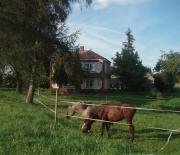 Do wynajęcia piętro domu z widokiem na jezioro i pasące się konie
