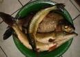 Połów z pobliskiego jeziora :)  5,30 kg
